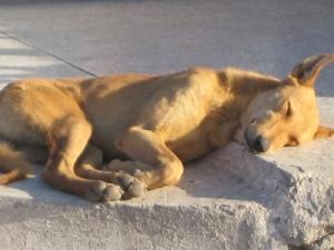 Sundog - Egypt